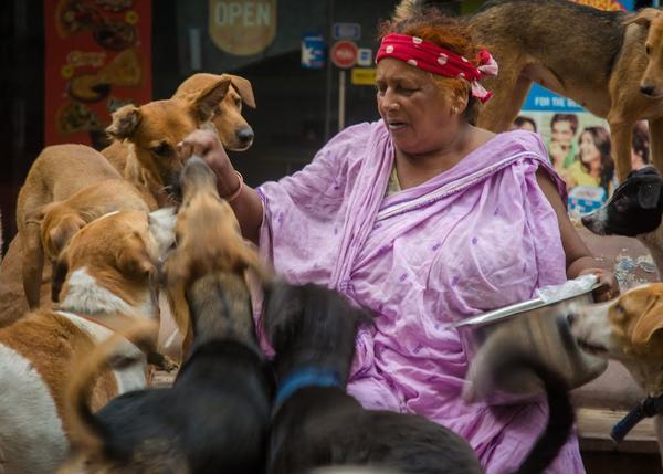 La Señora de los perros de Delhi