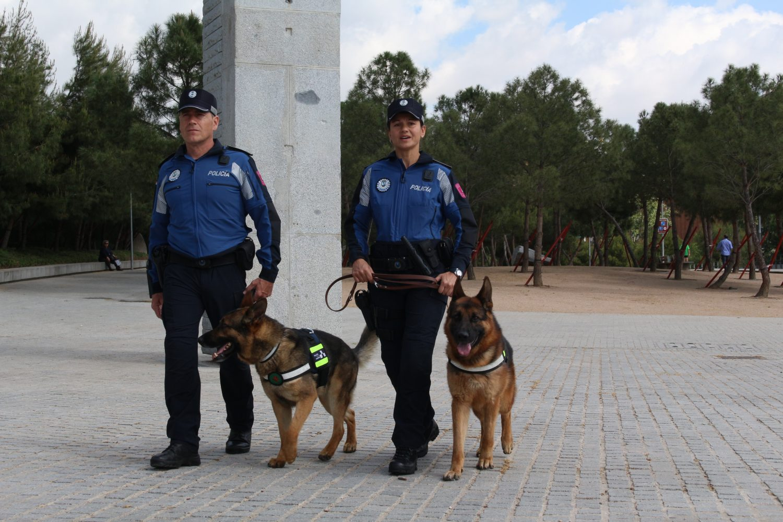 policías animales cachorro con garrapatas