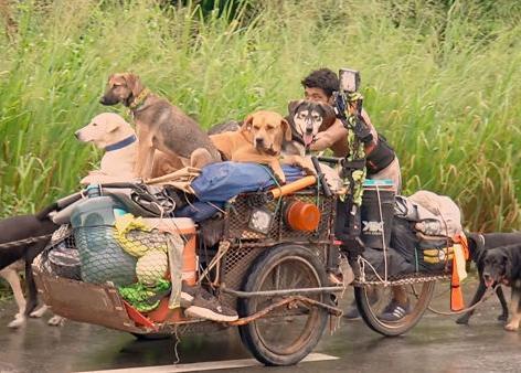 Un (buen) hombre recorre México ayudando a los perros que encuentra en su camino   SrPerro, la guía para animales urbanos.